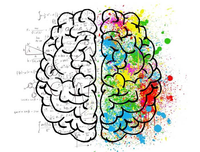 هر یک از نیمکرههای مغز چه عملکردی دارند؟